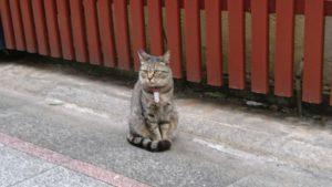miyazaki-cat