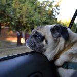 drive-dog